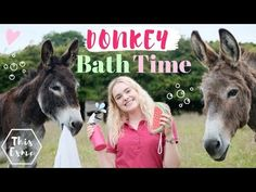 Donkeys are very sociable animals. That's why grooming sessions are so important. Read on to learn more on how do you bathe a donkey & more. Minature Donkey, Horse Care Tips, Horse Treats, Celebrity Travel, Animal Tattoos, Show Horses, My Ride, Bath Time, Exotic Pets