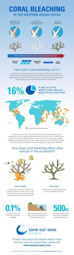 Coral bleaching « Save Our Seas Foundation