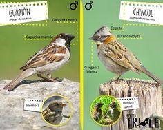Pet Birds, Animals And Pets, Birds Photos, Flora, Tattoos, Gardens, Illustration Art, Painting & Drawing, Animal Science
