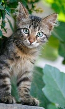 Baby Kittens, Baby Dogs, Kittens Cutest, Cats And Kittens, Creepy Cat, Cute Cats Photos, Cat Pose, Horses And Dogs, Cat Photography