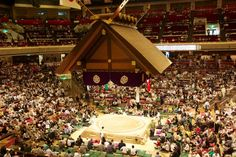 Stadion Sumo Tokyo! Japan Travel, The Good Place, Tokyo, Dan, Sumo, Christmas Tree, Nice, Holiday Decor, Places