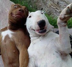 22 Animals That Wish They Could Snapchat Their Selfies