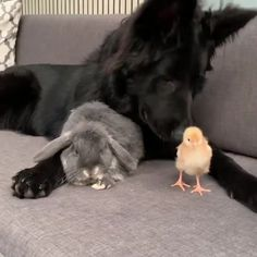 An interesting trio An interesting trio,Animals Related posts:Namaste T-Shirt - Yogayou see me every day, trap. Cute Little Animals, Cute Funny Animals, Cute Puppies, Cute Dogs, Cute Animal Videos, Videos Of Animals, Cute Creatures, Pet Birds, Animals Beautiful