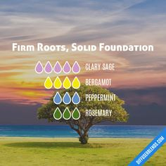 Firm Roots, Solid Foundation — Essential Oil Diffuser Blend Grounding Essential Oil, Sage Essential Oil, Essential Oil Diffuser Blends, Natural Essential Oils, Young Living Essential Oils, Natural Oils, Natural Healing, Homemade Essential Oils, Doterra Essential Oils