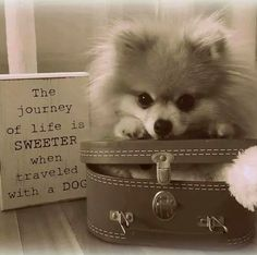 when traveled with a pom
