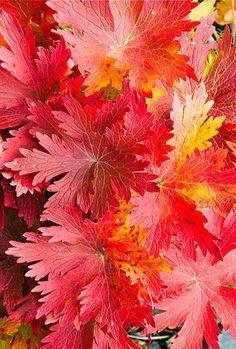 Closeup Detail of Autumn Leaves