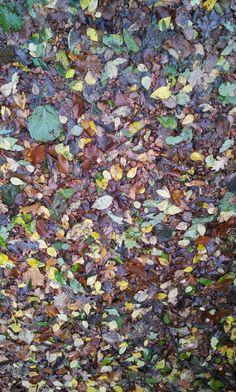 Autumn  II Herfst     II