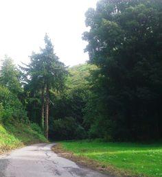 Driveway of Ashley Combe, Ada Lovelace's estate. Visit Devon, Ada Lovelace, Somerset, Writers, Texts, Sidewalk, Places, Women, Side Walkway