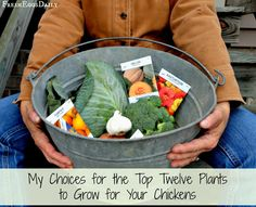 My Top Twelve Plants to Grow for Chickens - Fresh Eggs Daily®