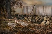 Geese Art - Out To Dry by Robin-lee Vieira