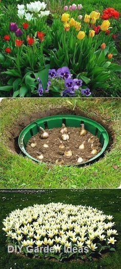 57 Fresh Spring Garden Ideas for Front Yard and Backyard Landscaping > bootzwall – Diy Garden Garden Projects, Garden Bulbs, Garden Design, Plants, Backyard Landscaping, Lawn And Garden, Backyard Garden, Outdoor Gardens, Container Gardening