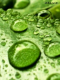 Green Green Green! Raindrops
