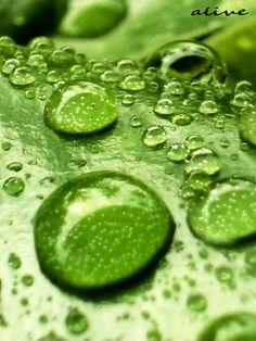 Raindrops | Flickr: Intercambio de fotos