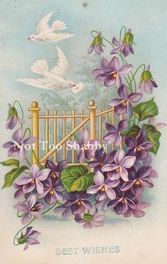 Postcard アンティークポストカードスミレと手紙を運ぶ白い鳩BESTWISHES インテリア 雑貨 家具 Antique ¥680yen 〆06月23日