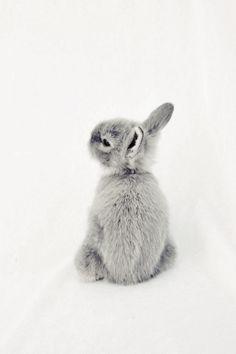 cute littel bunny