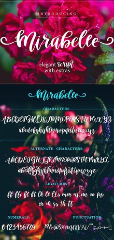 Mirabelle is an elegant script font perfect for designing quotes, printables, branding and Cricut projects. #scriptfont #fonts #branding #cricut Handwritten Fonts, Calligraphy Fonts, Script Fonts, New Fonts, Graphic Design Projects, Punctuation, Design Quotes, Hand Lettering, Commercial