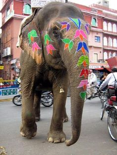 Getting so excited for my trip! india-jaipur-elephant
