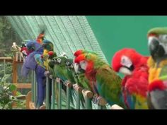 Shuka Vana ~ Rehabilitation Centre for Birds - YouTube