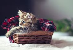 Cutest Kitten Daisy by Ben Torode