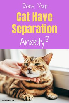 Seperation Anxiety, Cat Behavior Problems, First Time Cat Owner, Anxiety Cat, Pet Camera, Kitten Care, Cat Care Tips, Bad Cats, Trigger Points
