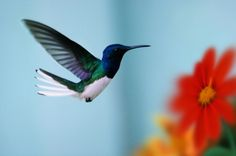 hummingbirds - a symbol of love peace and happiness