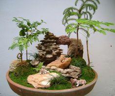 como-cuidar-de-bonsai-6