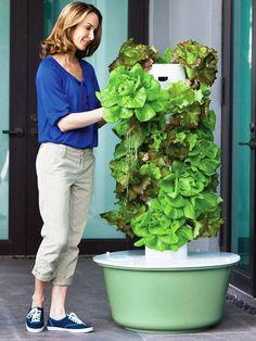 Gluten Free Vegan Journey: Growing Vertically in the Tower Garden!