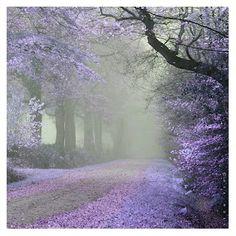 Paths – Photography, Landscape photography, Photography tips Beautiful World, Beautiful Places, Beautiful Roads, Beautiful Forest, Peaceful Places, Stunningly Beautiful, Beautiful Islands, Image Nature, Pathways