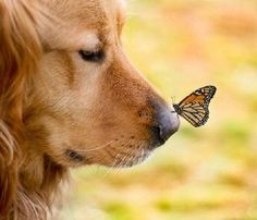 Pinterest / Search results for dogs and butterflies by McKenna ...