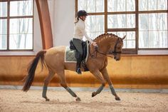 The most popular saddle pads on the market with Quick Dry function and freedom for the withers. Choose between dressage and jumping saddle pads. Jumping Saddle, Dressage Saddle, Equestrian Outfits, Equestrian Style, Dun Horse, Riding Jacket, Majestic Animals, Horse Photos, Saddle Pads