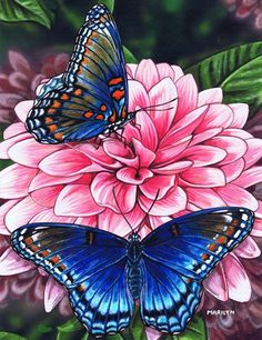 Marilyn Barkhouse Red Spotted Purple Butterfly is part of Butterfly Art painting - Red Spotted Purple Butterfly by Marilyn Barkhouse This Red Spotted Purple Butterfly Fine Art Print and related works can be found at FulcrumGallery com Purple Art, Purple Butterfly, Butterfly Flowers, Beautiful Butterflies, Butterfly Painting, Butterfly Watercolor, Butterfly Wallpaper, Butterfly Pictures, Arte Floral