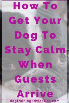 Dog Grooming Golden Retriever How to Get Your Dog to Stay Calm When Guests Arrive. Grooming Golden Retriever How to Get Your Dog to Stay Calm When Guests Arrive. Labrador Retriever, Golden Retriever, Dog Training Techniques, Dog Training Tips, Leash Training, Training Plan, Potty Training, Dog Minding, Dog Whisperer