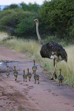 """Off to the beach for their first lesson in """"How To Bury Your Head In The Sand""""."""