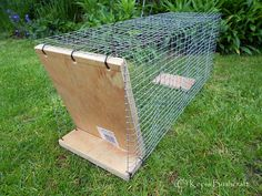 I made this Squirrel trap yesterday, as we have had a big problem with these animals recently, and this type of trap tends to sit a littl. Survival Life Hacks, Survival Prepping, Survival Skills, Survival Stuff, Hog Trap, Rabbit Traps, Tree Rat, Snare Trap, Wooden Rabbit