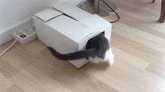 Box Exploded