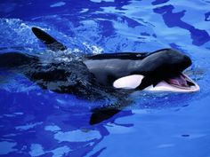 Image detail for -Ocean Animals pictures wallpapers images photos | Pictures of Animals