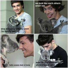 Koala bear=Cute...One Direction=Cute...Koala Bear& One Direction=Aboslutly Adorable!!!