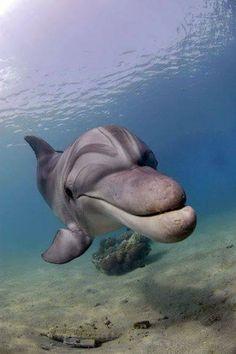 Beautiful Horse Pictures, Animals Beautiful, Water Animals, Baby Animals, Animal Photography, Water Photography, Bottlenose Dolphin, Animal Activities, Ocean Creatures