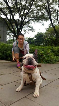 Smile! #dog #doglover #franchie #franchbulldog #bulldog #pitbull