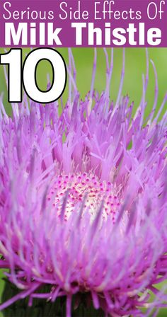 10 Serious Side Effects Of Milk Thistle