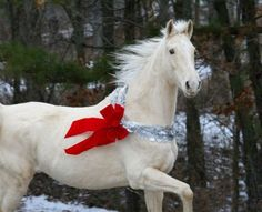 white christmas horse present red ribbon gift has to be the best one not under - Christmas Horses