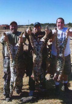 Three guys, three cats. More night time fun predator hunting in southwest Texas!