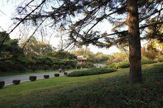 모란봉의 가을풍경(2)