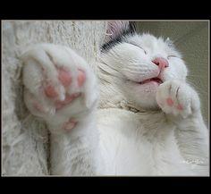mačička obrázky Tumblr