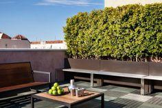 haie de jardin et plante pour mur végétal