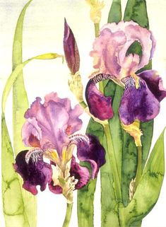iris watercolor by Lucinda Hayes Iris Painting, Watercolour Painting, Watercolor Flowers, Painting & Drawing, Watercolors, Watercolor Design, Botanical Illustration, Botanical Art, Iris Art
