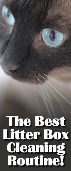 The Best Litter Box Cleaning Routine!  Go further to her other great cleaning and deoderizing tips!