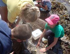 Wembury Marine Centre - Rockpool Bingo Marine Aquarium, Dartmoor, Rock Pools, Bingo Cards, Centre, Natural Pools