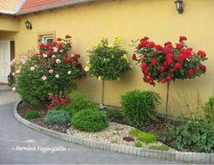 Igényes előkertek - Örökzöldek, virágok színkavalkádja az előkertben. - MindenEgyben