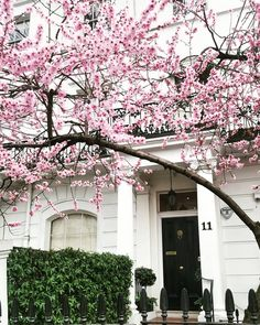 Spring in Notting Hill